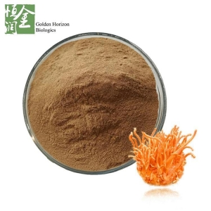 China Whosale Best Cordyceps Militaris Extract Polysaccharide on sale