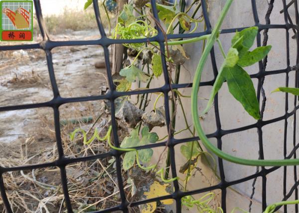 Hdpe Garden Climbing Plant Support