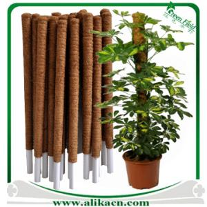 Coconut Plant Stakes Climbing Support Fiber Pole