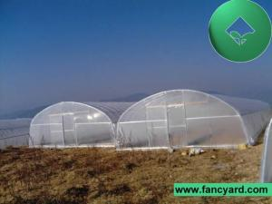 China Poly Film Greenhouse,Tomato Greenhouse,Flower Greenhouse on sale