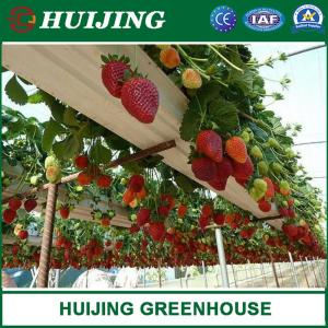 China China Manufacturer Single Span/Simple/Multispan/Tunnel Greenhouse/Plastic Film Tunnel Greenhouse for Fruit/Vegetable on sale