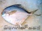 China Silvery Pomfret Silvery Pomfret wholesale