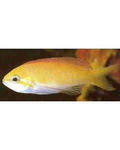 China Marine Fish wholesale