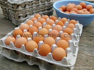 China Eco-friendly Waste Paper Pulp Molded Egg Tray Machine on sale